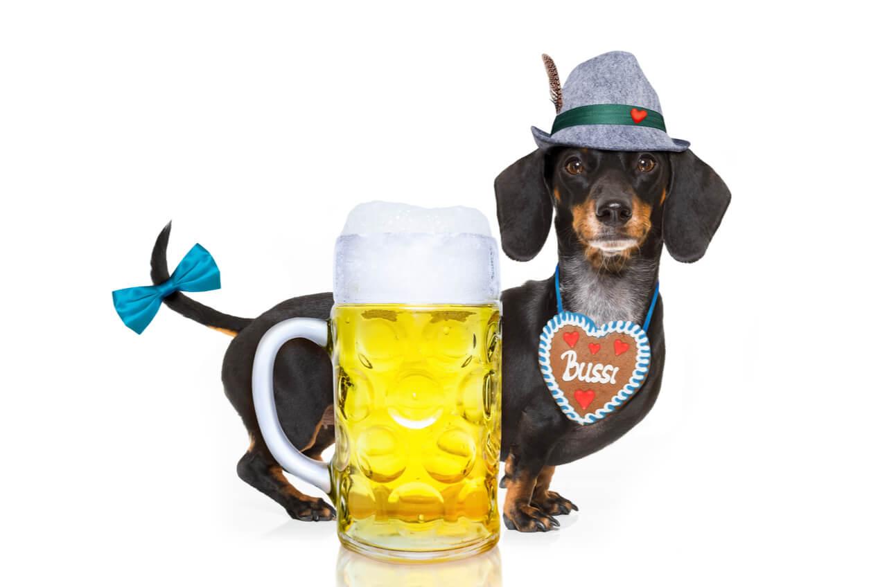 Bavarian dauchsund and beer stein